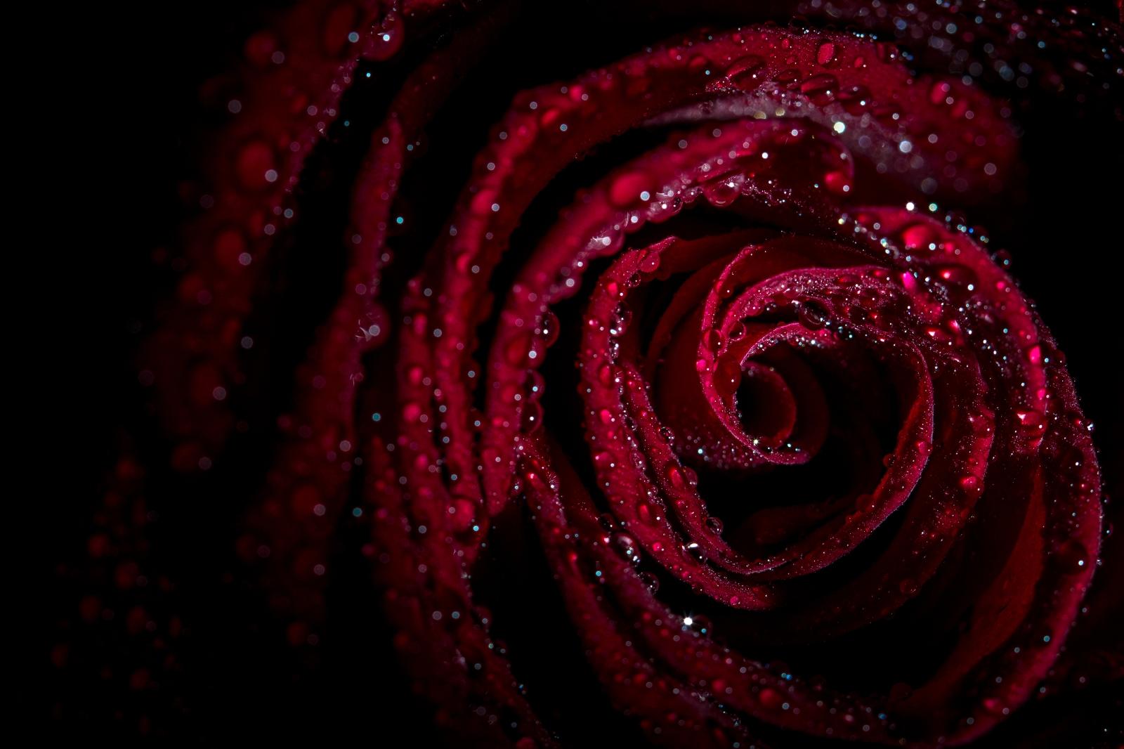 Бордовый цветы